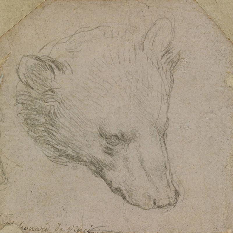 Леонардо да Винчи. Голова медведя. Около 1485.